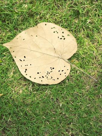burrows: big yellow leaf with bugs burrows over green grass