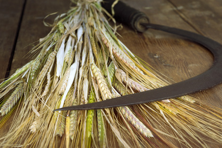 crop  stalks: vintage sickle and wheat bundle on the wooden table Stock Photo