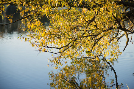 hanged: autumn willow branch hanged over river waters by evening