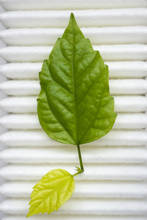 real green plant leaf on the surface of white clean air filter