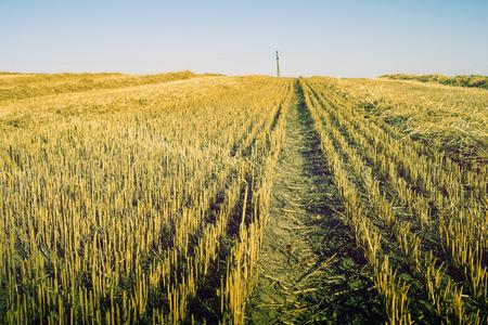 farm field: empty cropped farm field by early autumn
