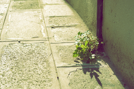rainwater: small plant survival on the city pavement close to rainwater sink