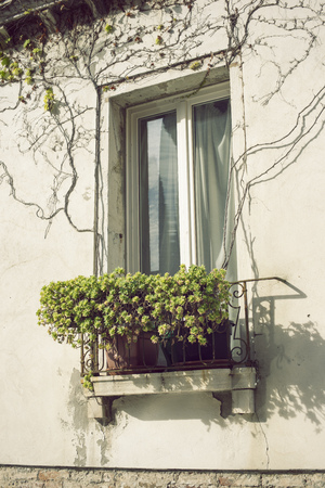 balcony window: window with small balcony and succulent home plants in pots in Venice, Italy