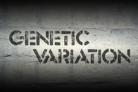 genetic variation print on the grunge white brick wall Stock Photo