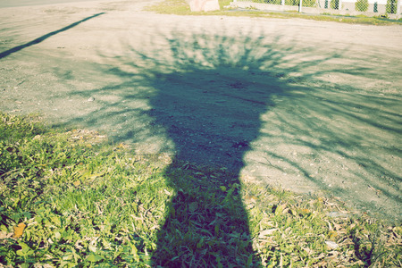 huge tree: huge spooky tree shadow on the country road Stock Photo