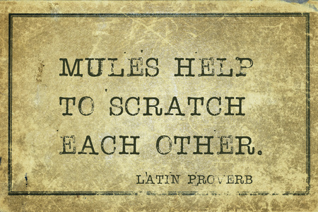 mules: Mules help to scratch each other - ancient Latin proverb printed on grunge vintage cardboard