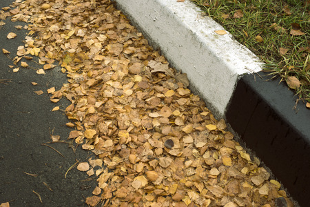 marked: many yellow leafs on asphalt close to marked edge