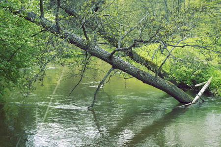 surrounding: two fallen trees in springtime river stream with fresh green surrounding Stock Photo