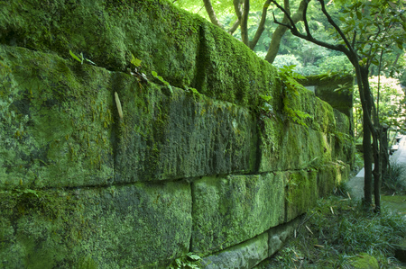 field depth: ancient green mossy wall with shallow depth of field