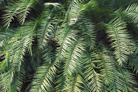 the thicket: green detailed tropical thicket background Stock Photo