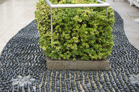 black pebbles: green flowerbed on ornamental black pebbles pathway in Chinatown of Singapore Stock Photo
