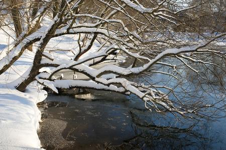 mucha nieve en enormes ramas de sauce sobre las aguas del río
