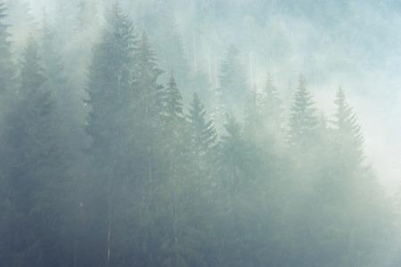 atmosfera: atm�sfera de niebla prima en los bosques de monta�a Foto de archivo