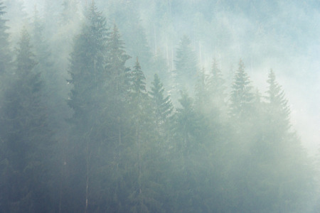 raw foggy atmosphere in mountain forest Stock Photo