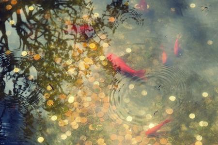 日本池底に異なる硬貨の完全に小さな赤い魚