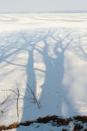 thaw: huge bare trees shadow on thaw winter snow by sunny day