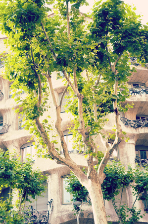 sicomoro: sicomoro panoramica a Barcellona entro l'estate