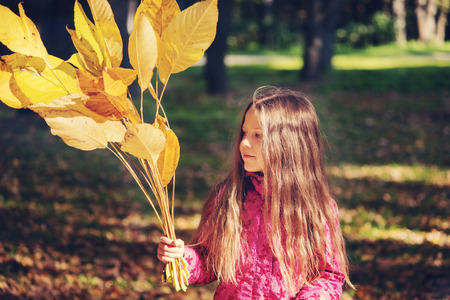 fall of the leafs: child girl with yellow fall leafs outdoor