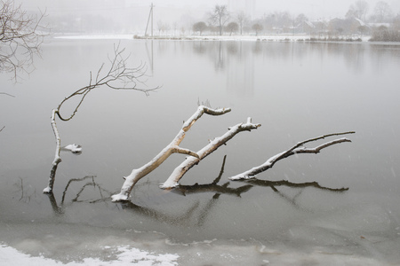 drowned: scenic winter landscape with drowned tree under fresh snow
