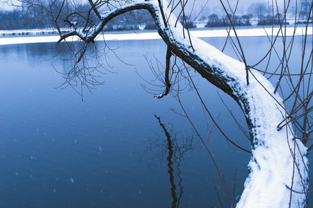 river trunk: blue toned evening landscape on the river with bent willow trunk covered by fresh snow