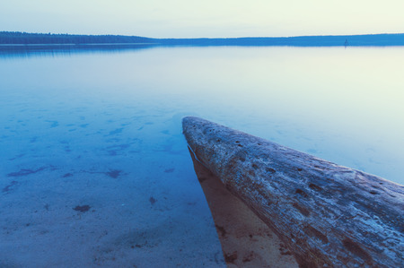 submerged: huge tree trunk submerged into lakes water by twilight