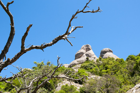 rocky peak: summer mountain landscape with rocky peak and bare dry tree branches on foreground Stock Photo