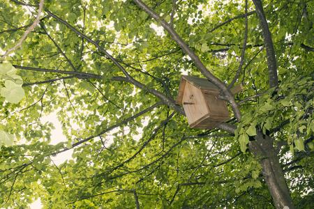 wooden birdhouse on tree among green summer leaves