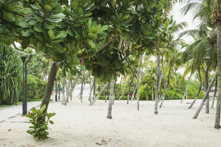 green fresh trees on sand beach of Sentosa island in Singapore Stock Photo