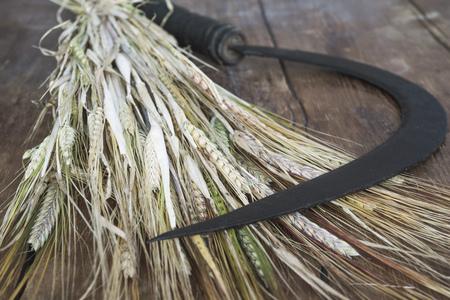 rusty vintage sickle on ripe wheat stalks