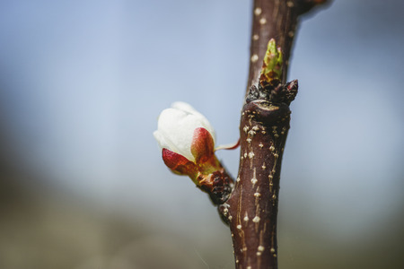 small flower opening on tree branch by spring