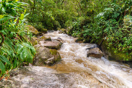 mountain river stream in tropical forest in Peru Stok Fotoğraf