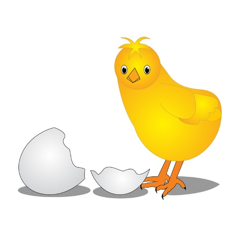 defenseless:  The Chicken near by split egg, is insulated on white.