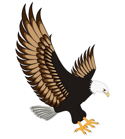 eagle feather: illustration flying eagle insulated on white background