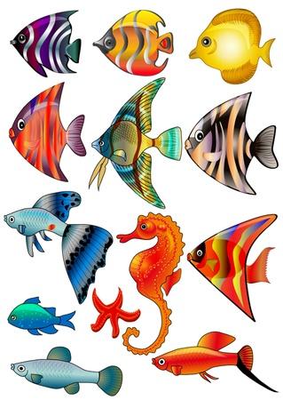 goldfish:  illustration kit fish is insulated on white background