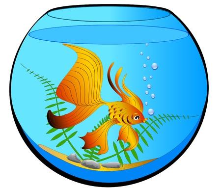 pez pecera:  Acuario de ilustración con algas y peces de oro