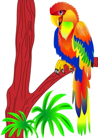 macaw:  illustration parrot sitting on tree is insulated