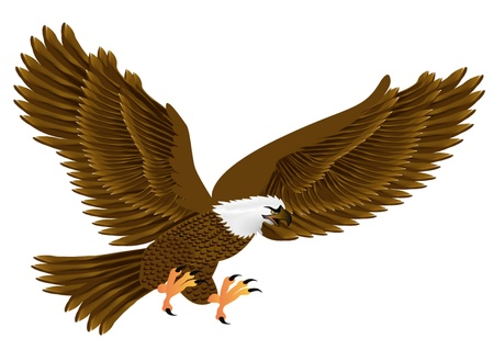 illustration flying eagle insulated on white background