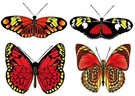 illustration kit butterfly is insulated on white Stock Vector - 10904594
