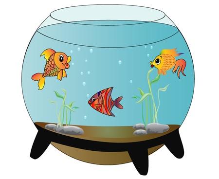 fresh water aquarium fish:  illustration aquarium with merry fish is insulated