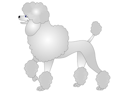 illustration nice poodle insulated on white Vector