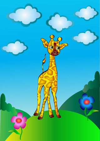 hillock:  high, nice young giraffe cost(stand)s on hillock
