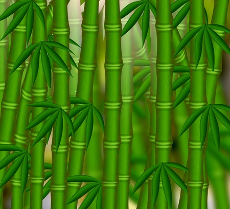 The Bamboo grove on green background. photo