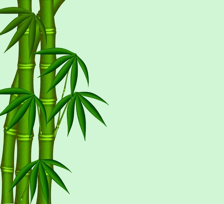 lucky plant: The Young bamboo on green background.