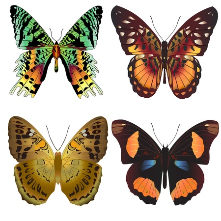 illustration set beautiful butterfly on white background Stock Vector - 14411436
