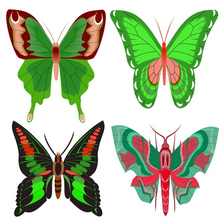 illustration set beautiful butterfly on white background Stock Vector - 14471892
