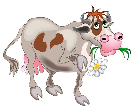 illustration cow with flower is insulated on white  Vector