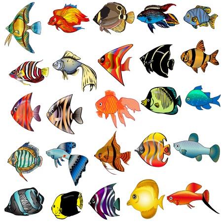 peces caricatura: peces ilustración kit está aislado en el fondo blanco