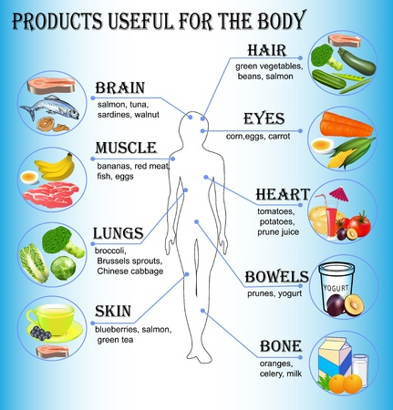 eating healthy:  illustration of products useful for the human body