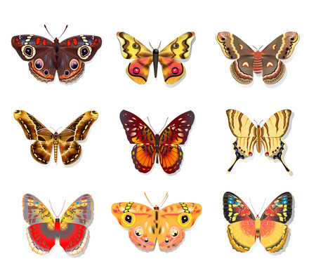 moths: illustration set beautiful butterfly on white background