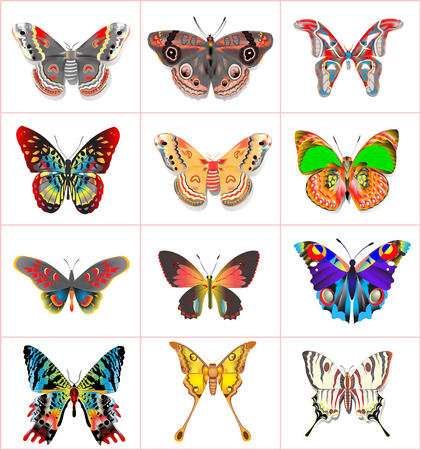 Illustration set insect butterflies on a white background